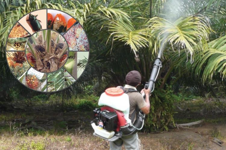 jeni hama kelapa sawit