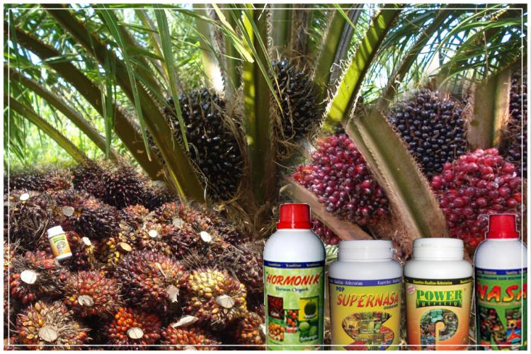 pupuk kelapa sawit nasa