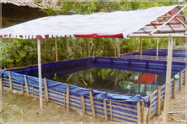 cara membuat kolam terpal