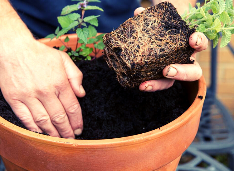 manfaat pupuk kandang untuk tumbuhan