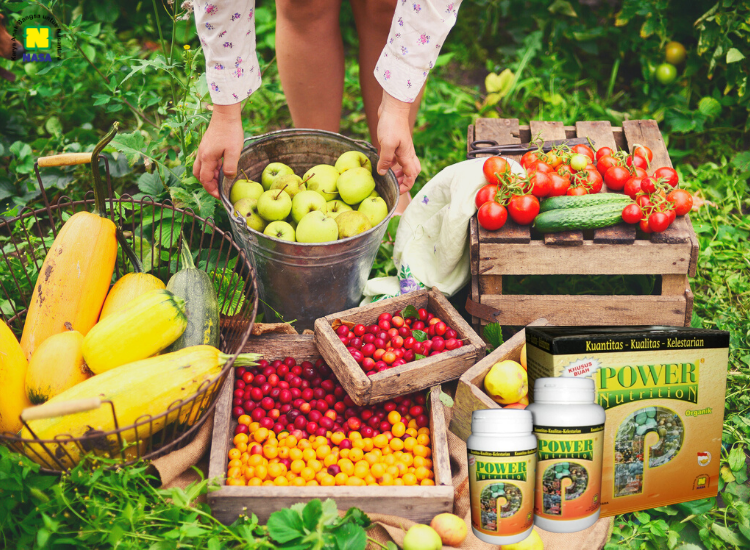 power nutrition untuk buah