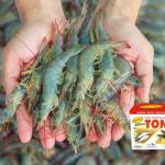 Tambak Organik Nusantara 3 Kg