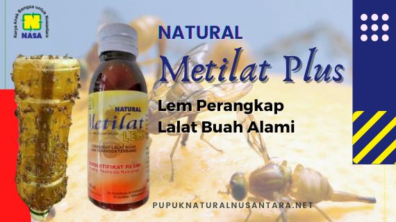 Metilat Plus (Perangkap Lalat Buah)