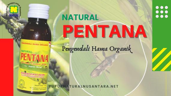 Natural Pentana Pestisida