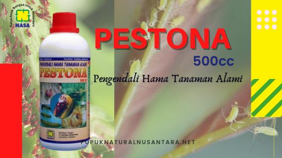 Pestona Nasa
